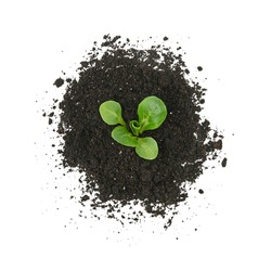 Close up one green spring plant sprout growing from heap of black humus soil isolated over white background, elevated top view, directly above