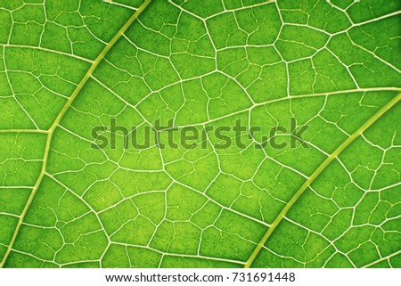 close up or macro of green leaf grunge texture. green leave structure in macro mode. abstract background for graphic editor