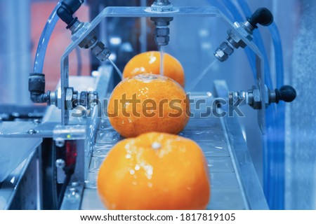 close up orange citrus washing on conveyor belt at fruits automation water spray cleaning machine in production line of fruits manufacturing. agricultural industry and innovation technology concept.