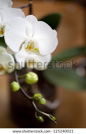 close up orchid flowers