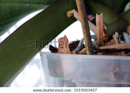 close up orchidaceae leaf in a...