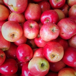 Close up, overhead of bunch of shiny Macintosh apples.