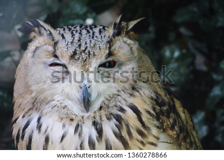 Close up owl winking into camera #1360278866