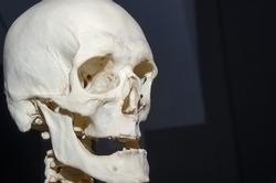 Close up photo of a human skull