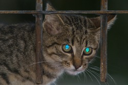 close-up photo of a kitten's face. tapetum lucidum reflecting the light
