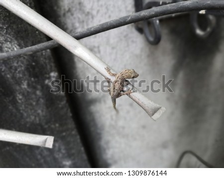 close-up photo of a lizard on the edge #1309876144