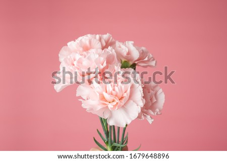 Close up photo of a pink carnation bouquet isolated over pink background with copyspace