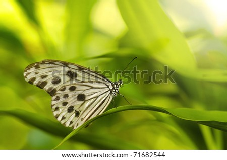 close up photo of butterfly with ray of lights