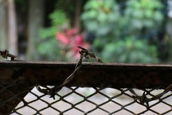 close up photo of fence with barbed wire in front of the house