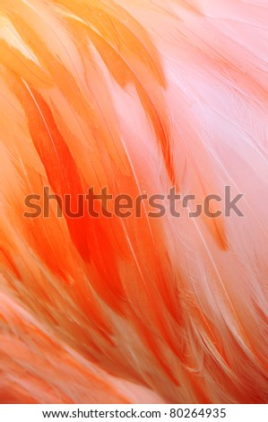 Close-up photo of Flamingo Fathers