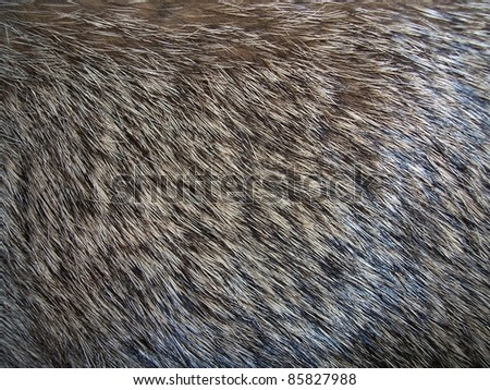 Close up photo of Fur