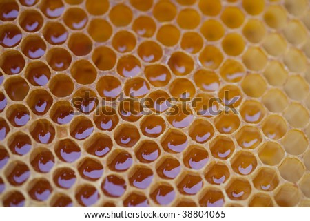 Close up photo of honey comb filled with honey