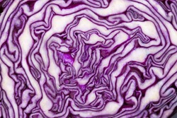 close - up photo of red cabbage