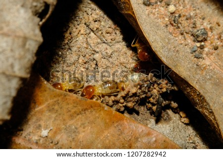 close up photo of termite