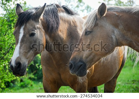 close up photo of two horses #274534034