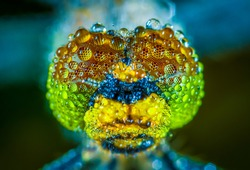 Close Up Photo of Water Dew on Dragonfly Insects