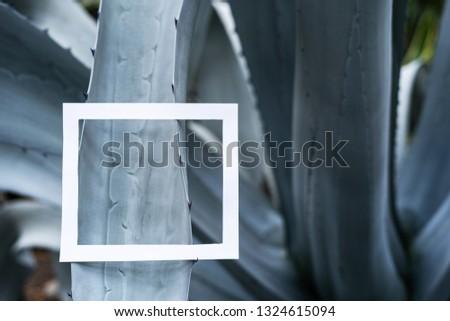 Close up photo of white square frame on beautiful aloe leaf #1324615094