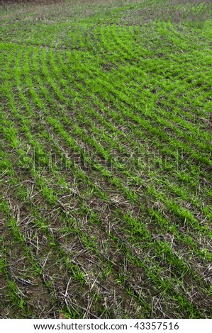 Close up photograph of cultivated field farm land with green grass growing from a previous planting