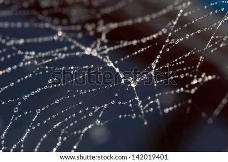 Close up photograph of spider web
