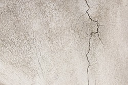 Close-up photography  of crack on the bone