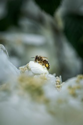 Close up photos of a bee in nature