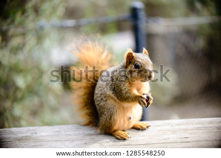close up photos of outdoor squirrel in the spring
