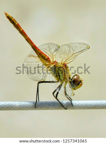 close up pic for insect