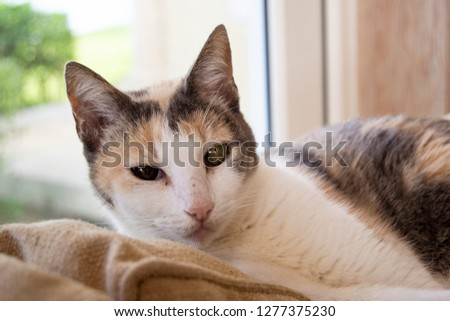 close up pic of a domesticated cat on the couch