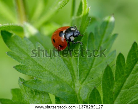 Close up picture of a ladybug