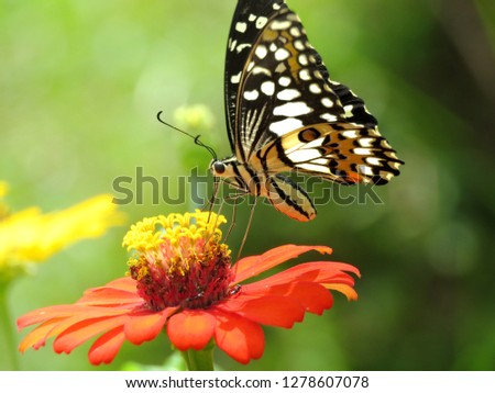 Close up picture of pretty stripes butterfly on red beauty flower In blurred green images backdrops, wonderful fresh morning in garden. Beautiful nature background concept. Free space for add text.
