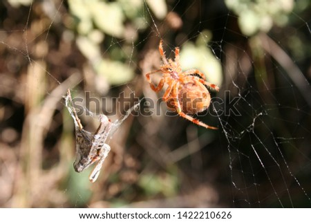 Close Up Picture Of Spider With His Prey In The Net.