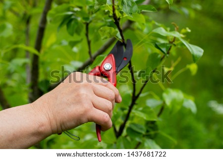 Close up picture of woman's hand holding garden shears, cutting off old branches in the garden on springtime outdoor