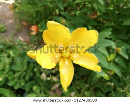 Free photos yellow flower 5 petals avopix close up pictures of five petals yellow flower in a street garden 1127488508 mightylinksfo