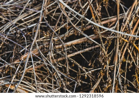 Close up pile of dry wooden twigs in random order #1292318596