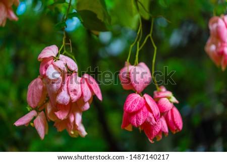 Close-up pink flower in the garden. #1487140217
