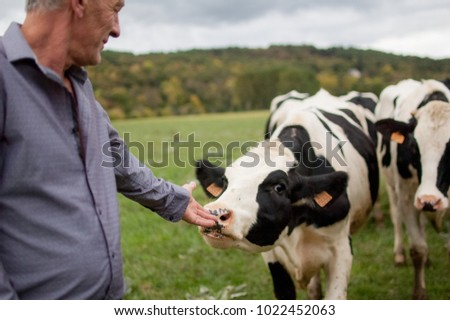 Close up Portait of Senior Farmer Proudly Looking at His Cattle in the Countryside Outdoors.