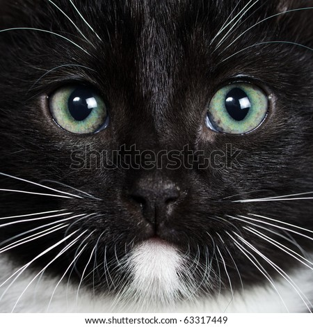 Close-up portrait of a black kitten - stock photo