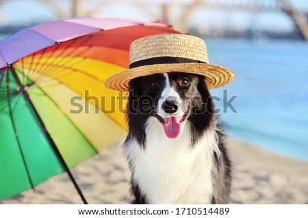 Close-up portrait of a border collie in a straw hat