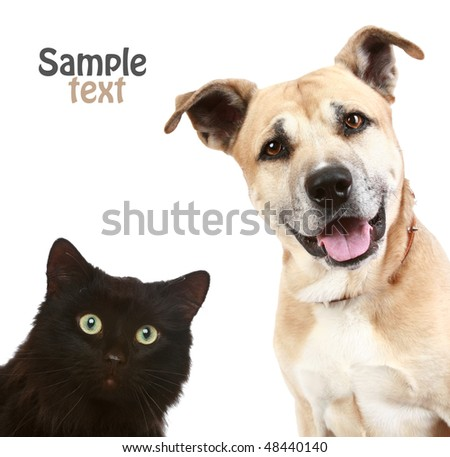 Close-up portrait of a cat and dog. Isolated on white background