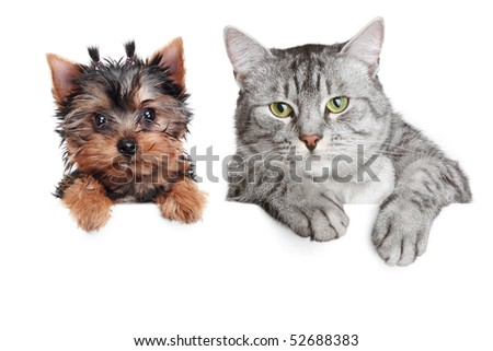 Close-up portrait of a cat and dog, isolated on white background - stock photo