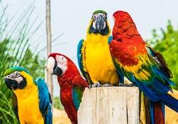 close-up portrait of a colorful parrots