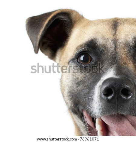 Close up Portrait of a Dog