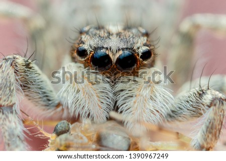 Close up portrait of a little spider with his prey