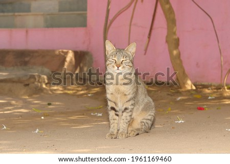 close-up portrait of A pet tabby cat sitting in the courtyard of the house. concept to portrait Tabby cat , Pet Tabby cat , Tabby cat face , cats pose. Stock photo ©
