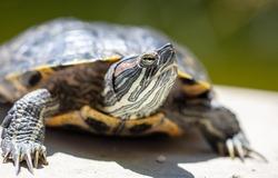 Close up portrait of a turtle.