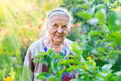 Close up portrait of a very old wrinkled woman of eighty or ninety years old, looking down, staying in her garden. Old age and lifestyle concept. Aging process.