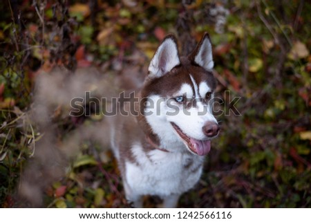 Free Photos Close Up On Red Eyes Of A Dog Avopix Com