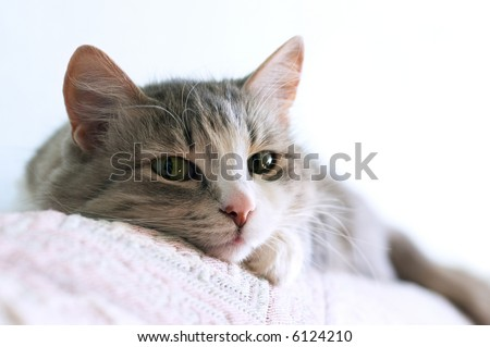 close-up portrait of adorable cat lays on sofa (shallow DOF)