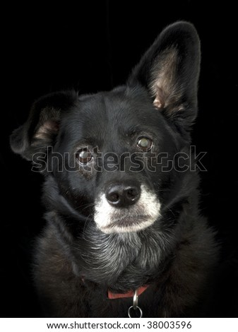 Close up portrait of an older dog looking sad