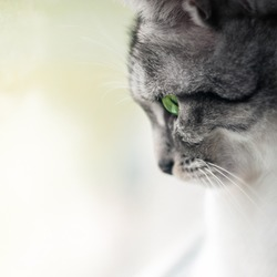 Close up portrait of cat with green eyes